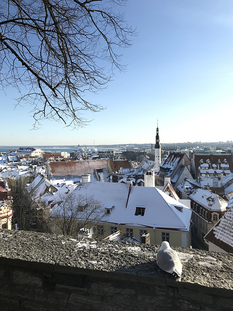 Kohtuotsa viewing platform in Tallinn